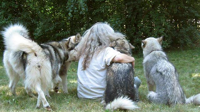 malamutes-with-child