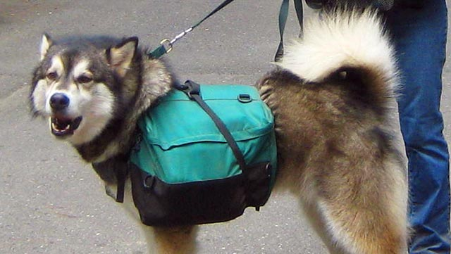 on-leash-with-backpack